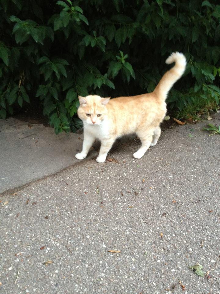 Guess chat européen, service à domicile