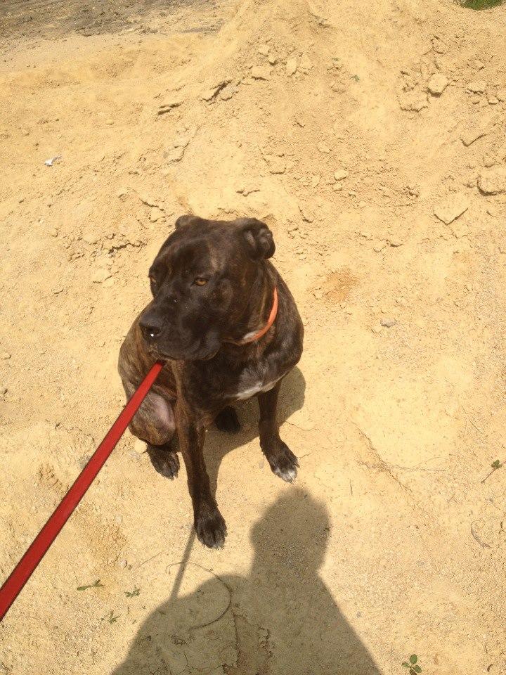 Eros chien en promenade