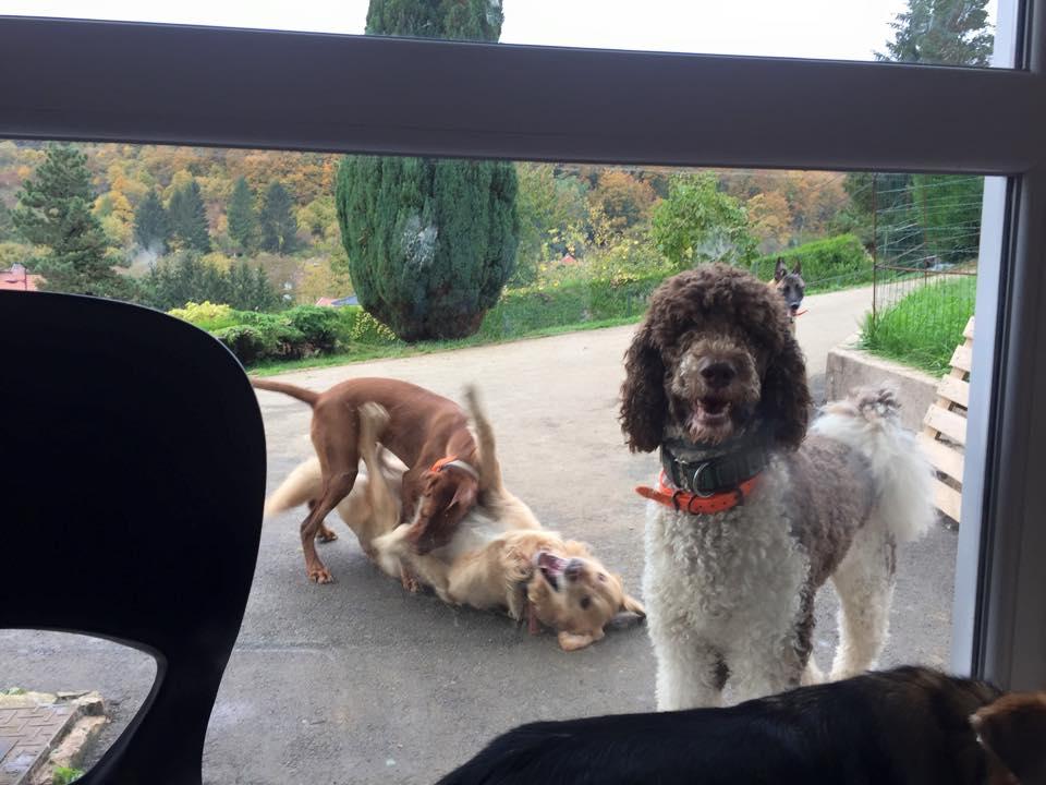 Daisy, Handy et Léon