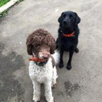 Daisy et Iris