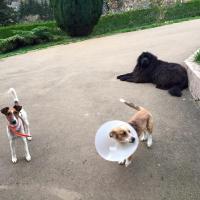 Gaïa apres sa stérélisation, Flocky et Lola