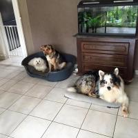 Zazou, Picatchou et Yara