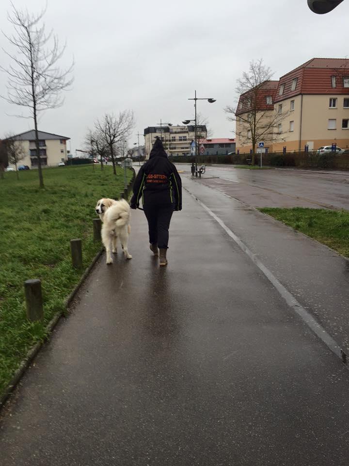 Loyd en promenade