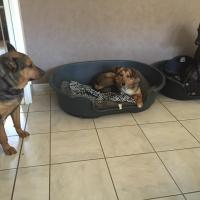 Poupette Yara et Tara