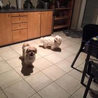 Rox et Rocky