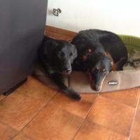 Iris et Iris