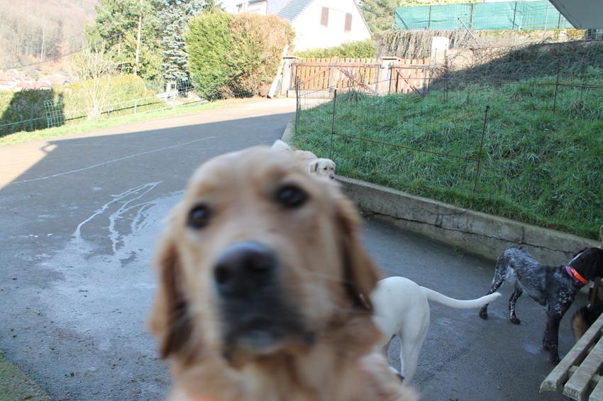 """Celeste """" tu veut ma photo ??!!??"""