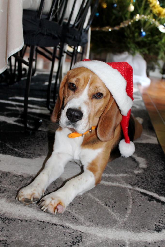 Esko Beagle