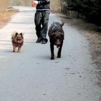 Tao et Peaches en promenade