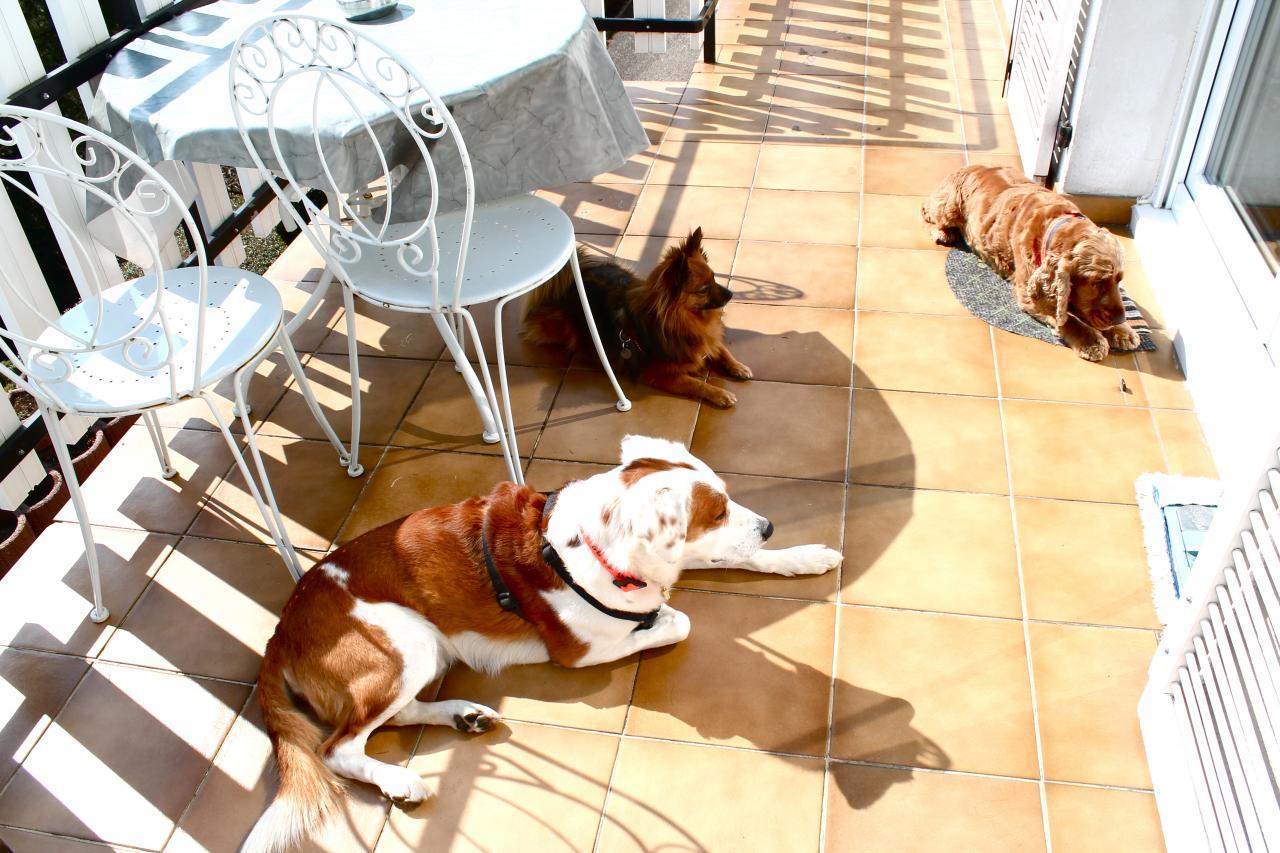 Saxo , Peaches et Draco qui profitent du soleil !