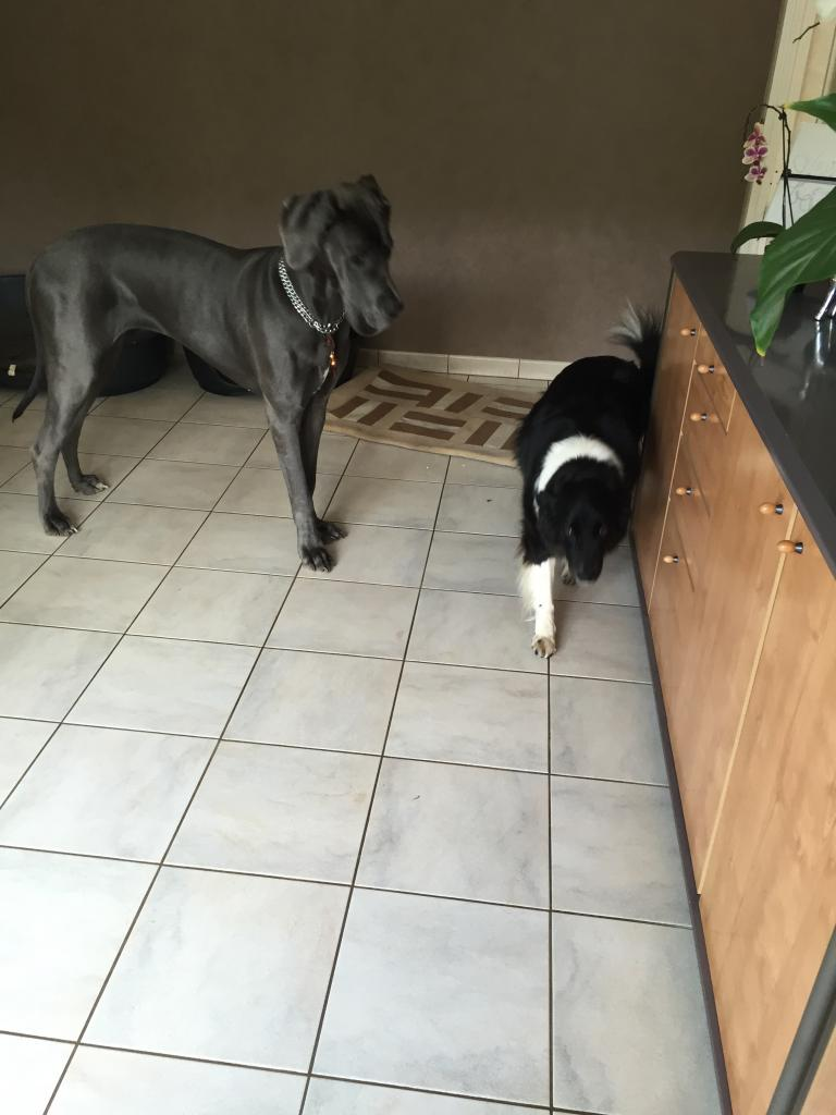 Lorenza et Maya