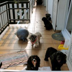 Les loulous sur le balcon, Google, Elfy, Maia et Moka