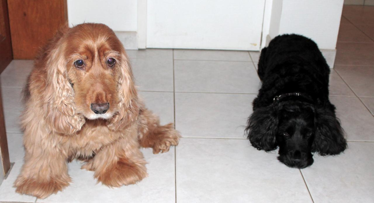 Canelle et Elfy 2 coker