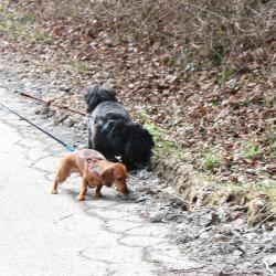 La promenade ici : Daisy et Moka