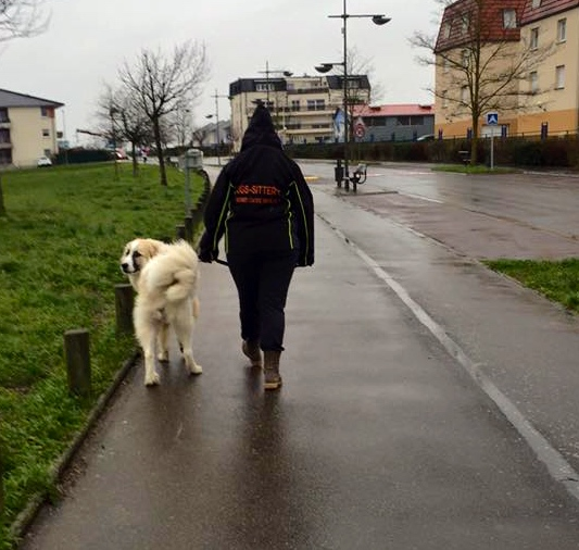 Promenade avec Loyd