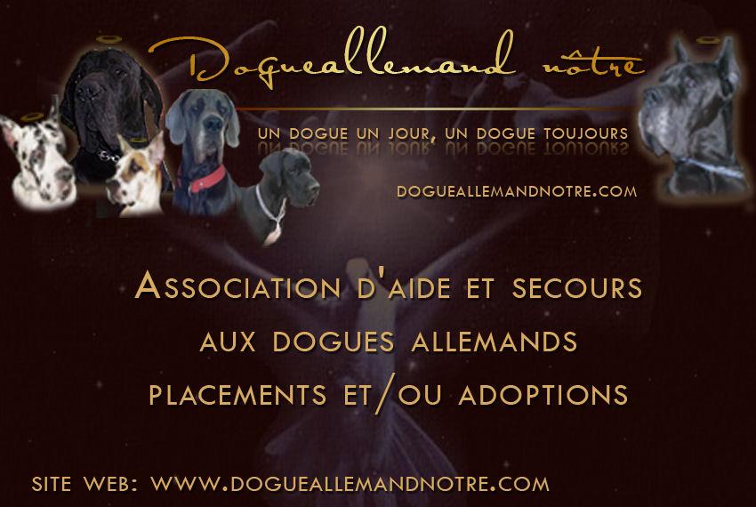 Association Dogue Allemand Notre