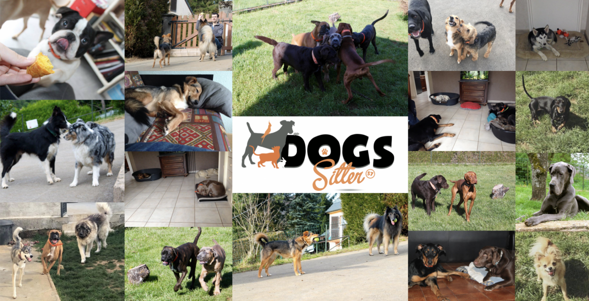 Logo dogs sitter57